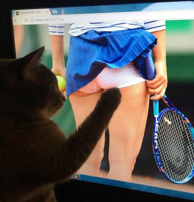 Un chat qui nettoie un écran.