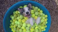 Un chien millionnaire