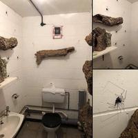 Les toilettes des filles