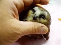 Adorable oiseau