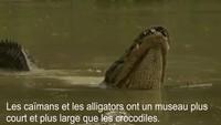 Vibration d'alligator