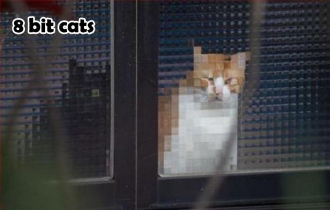 Des chats 8-bit IRL.