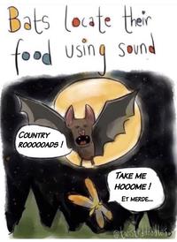 La chauve-souris détecte ses proies au son