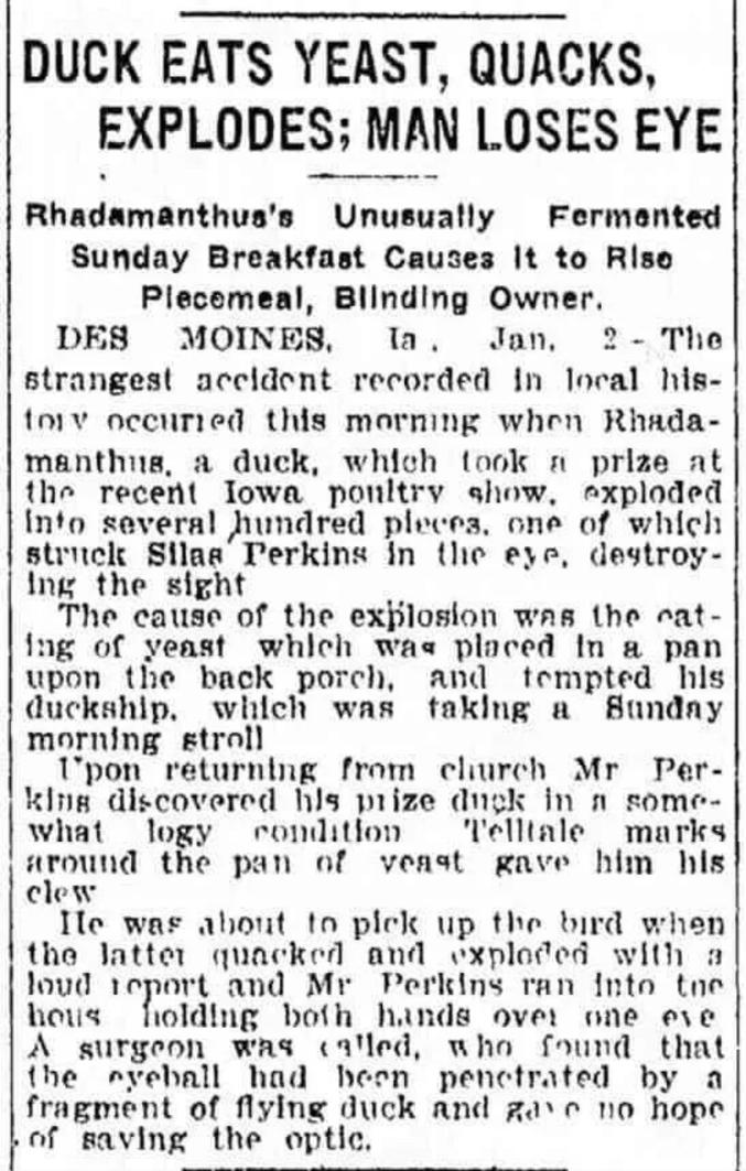"""Extrait du journal St. Louis Post-Dispatch, 4 janvier 1910 :  """"L'accident le plus étrange répertorié dans l'histoire locale s'est produit ici [à Des Moines] lorsque Rhadamanthus, un canard qui avait remporté des prix lors du récent salon de la volaille de l'Iowa, a explosé en plusieurs centaines de morceaux, dont l'un a frappé Silas Perkins dans les yeux, le rendant aveugle. La cause de l'explosion prématurée de Rhadamanthus était une casserole de levure. Celle-ci, posée sur le porche arrière de Perkins, tenta le canard, qui faisait sa promenade dominicale. À son retour de l'église, M. Perkins découvrit son canard médaillé dans un drôle d'état. Des marques révélatrices autour de la casserole de levure lui donnèrent un indice du problème. Il était sur le point de ramasser l'oiseau quand il explosa dans une forte détonation ; Perkins courut vers sa maison, les deux mains sur un œil. Un chirurgien fut appelé et il constata que le globe oculaire avait été percé par un fragment de canard. Il ne donna aucun espoir que la vue pourrait être sauvée."""""""