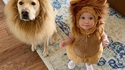 De redoutables lions dans ta maison