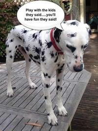 Les gosses ont joué avec le chien...