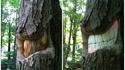 Détartrage arboricole