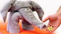 Comment faire un éléphant en serviettes
