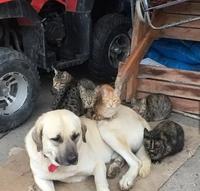Comme chat et chien 42