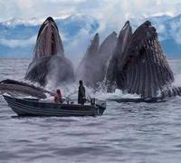 Orchestre d'orques