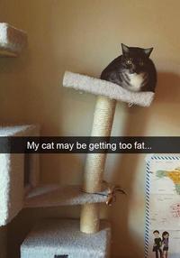 Indicateur de poids