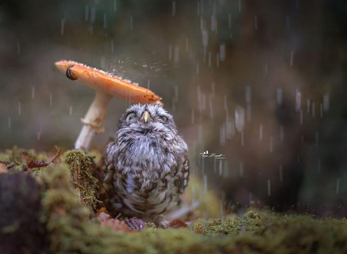 'culé de crachin, heureusement qu'il pousse des parapluies !