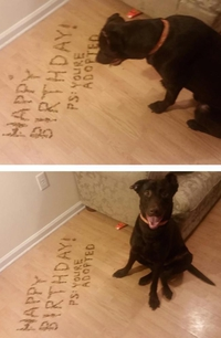 Tu as été adopté