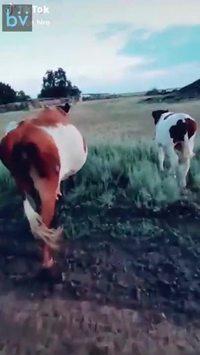 Comment désactiver une vache