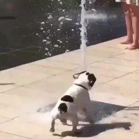 Un chien jouant avec un jet d'eau