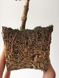 Avoir de bonnes racines