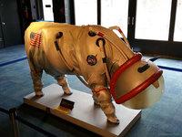 Combinaison spatiale pour les vaches