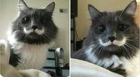 Cuir cuir cuir Moustache
