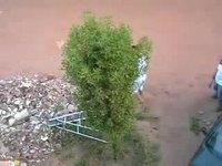 Tailler un arbuste