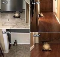 Journée de chat