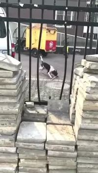 Un chien, des barreaux