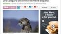 Mars 2011: le cougar américain est une espèce animale officiellement disparue