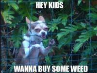 Pssst, hey kids...