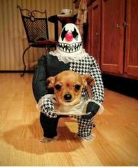 Tête de chien
