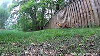Le renard et l'écureuil