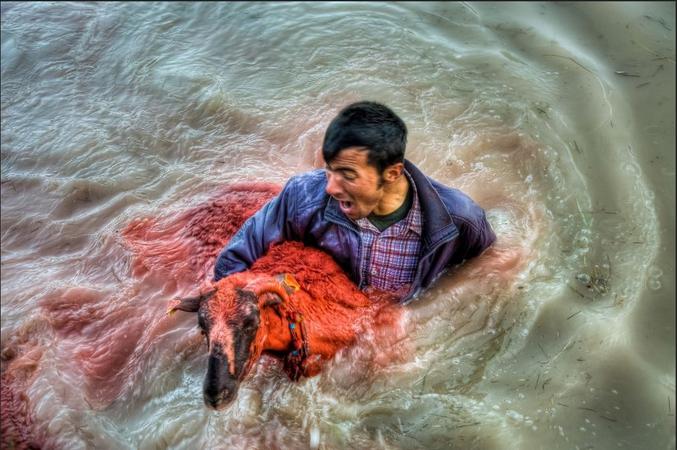 À Tefenni, ville de Burdur en Turquie, un festival a lieu la première semaine d'août. Les bergers qui viennent de différents villages essaient de traverser un ruisseau avec leurs troupeaux de moutons. Seuls quelques bergers peuvent réussir. Le festival commence à 5 h 30 avant le lever du soleil et se termine à 8 h 30 lorsque le soleil se lève, car les moutons craignent les lueurs à la surface de l'eau et ne veulent pas nager. (NB : Sur la plupart des photos relatant cet événement, on ne voit que des hommes à 95%)
