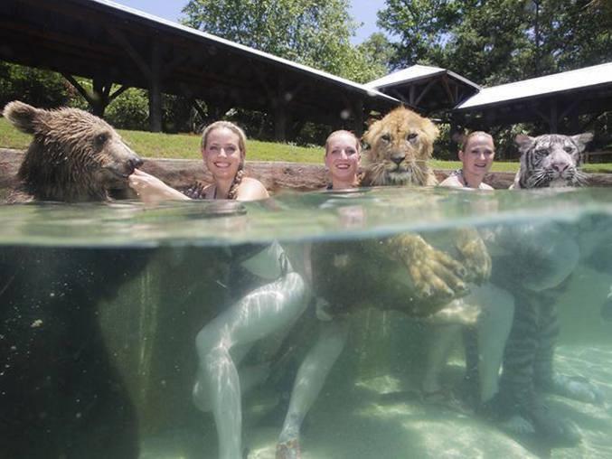 Des filles dans une piscine avec un ours, un lion et un tigre.