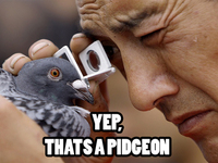 Yep, It's a pidgeon