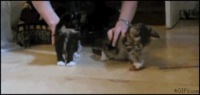Des chaton trop migno....