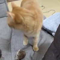 Chat très chien