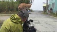Un chaton roux assujettit un caméraman sans défense
