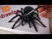 Dessin d'une araignée réaliste