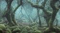 Une petite promenade dans les bois ?