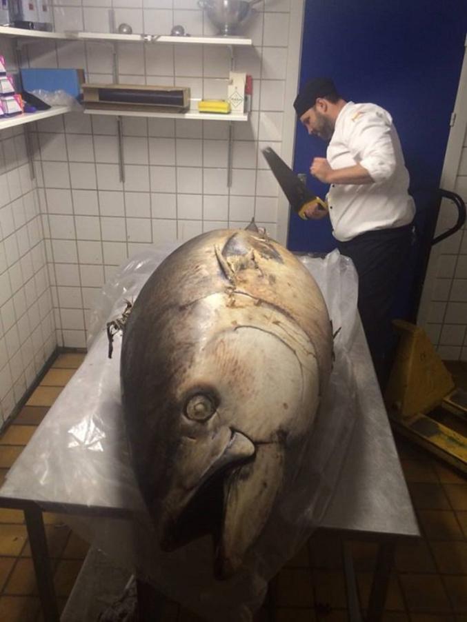 Après le tartare au couteau, le thon à la scie.