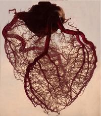 Artères du cœur