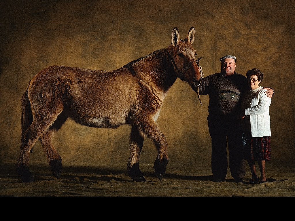 Mule du poitou for Fond ecran photo yann arthus bertrand