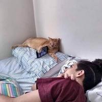 Utiliser correctement son chat