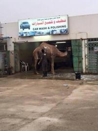 Les bosses du lavage de véhicules