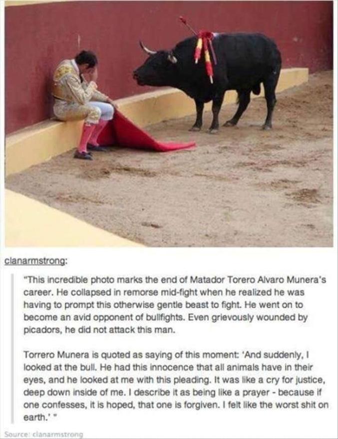 """Cete photo incroyable marque la fin de la carrière du matador Alvaro Munera.  Il s'effodre de remords en plein combat quand il se rend compte qu'il devait forcer la bete au tempérament doux a se battre. Il est devenu un opposant féroce des corridas. Bien que grievement blessé par les picadors, le taureau n'attaque pas l'homme.   Le torrero Munera aurait dit à ce moment """"Et tout d'un coup,je regarde le taureau. Il avait cette innocence qu'ont tous les animaux dans leurs yeux, et il me regardait en implorant. C'était un appel à la justice, au plus profond de moi. Je le décrit tel une prière - parce que si l'on se confesse, esperons le, nous sommes pardonnés. Je me suis senti comme la pire merde sur Terre. """""""