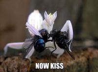 Un bisou ! Un bisou !