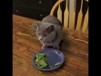 Un chat qui manque des épinards