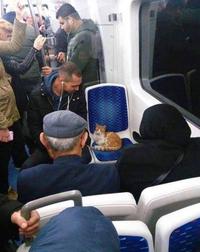 Un petit FDP prend le train