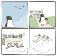 Brevet de pilote