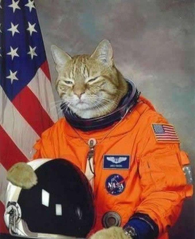 Un chat de l'espace.