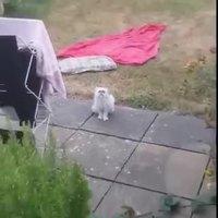Maman, y'a un chat bizarre