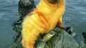 Un phoque jaune